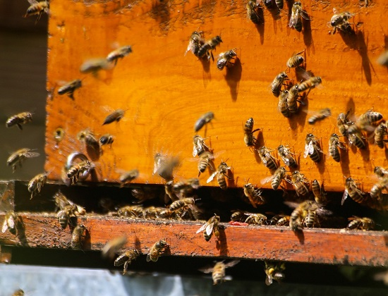 Meet the Busy Bees at the Bourne Business Park